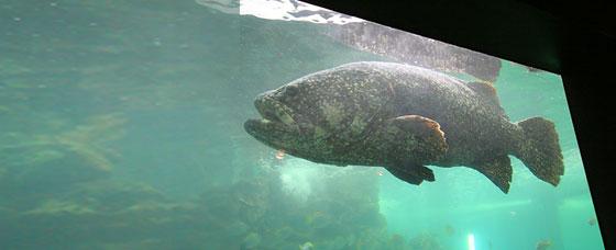 สถานแสดงพันธุ์สัตว์น้ำภูเก็ต (Phuket Aquarium)